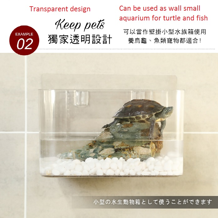 3.Turtle fish acquarium.jpg